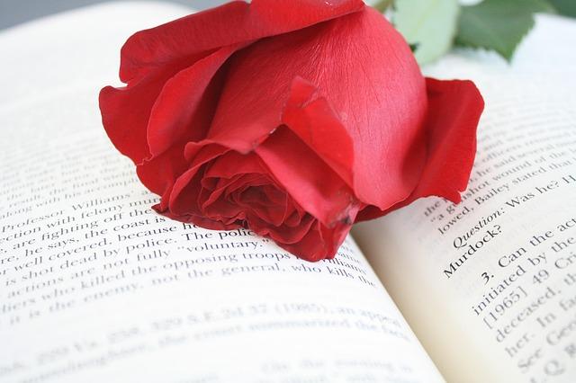 червена роза поставена върху отворена книга с текст на английски